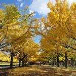 昭和記念公園2015・紅葉の見頃の時期は? ライトアップや混雑予想は?