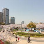 お花見の日が雨に!雨でも10倍大阪で楽しめる場所
