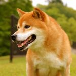 台風が来た時に外で飼っている室外犬はどうするべき?安全対策は?