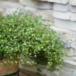 【風水】玄関には観葉植物?劇的に運気を変えたいならしておきたい事